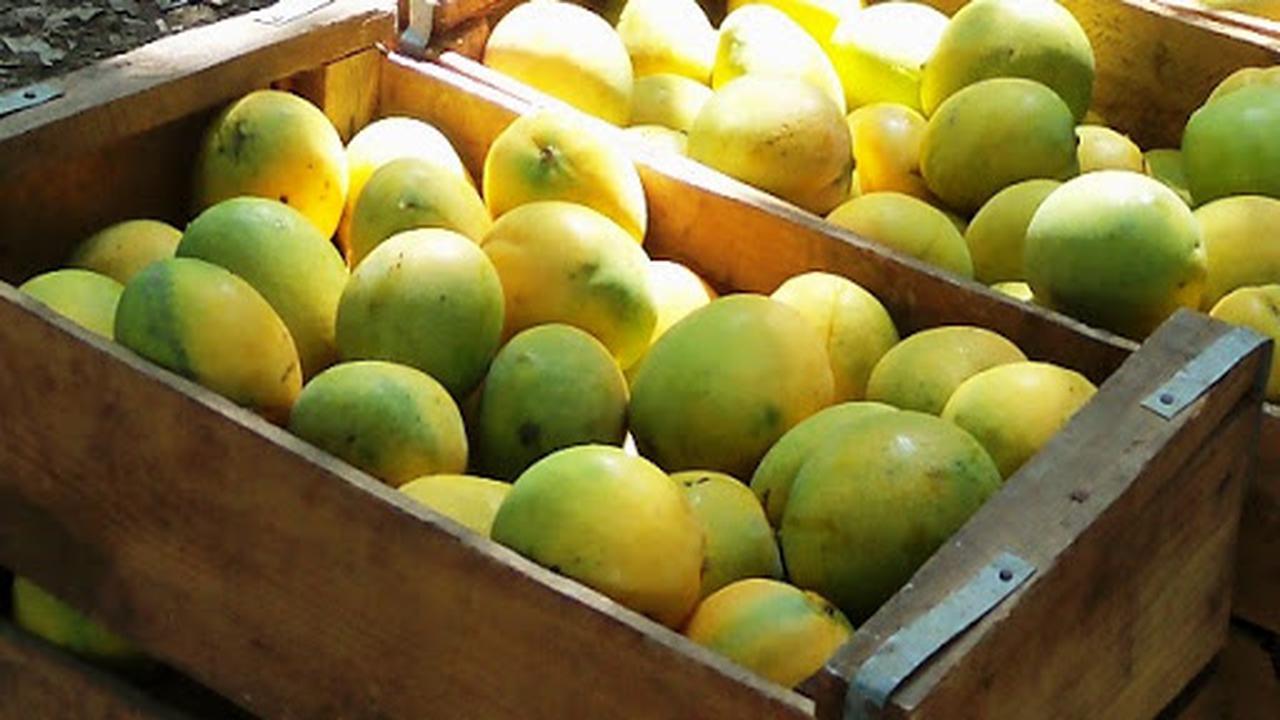 Frutas de Cuba